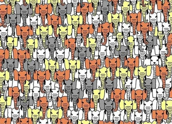 New brainteaser making waves: Spot the panda