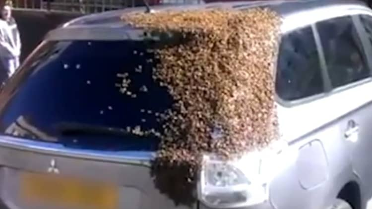 Swarm of bees descends on man's Mitsubishi