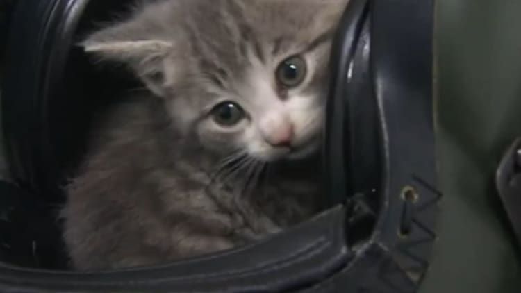 Kitten rides 300 miles in Royal Navy pilot's BMW