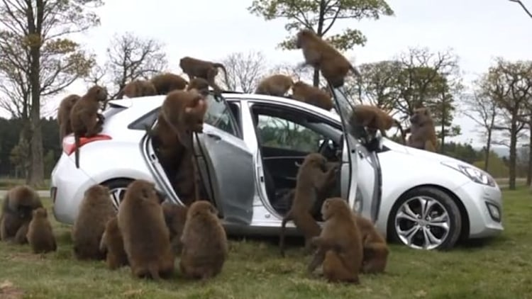 What kind of baboons would do this to a Hyundai i30 hatchback?