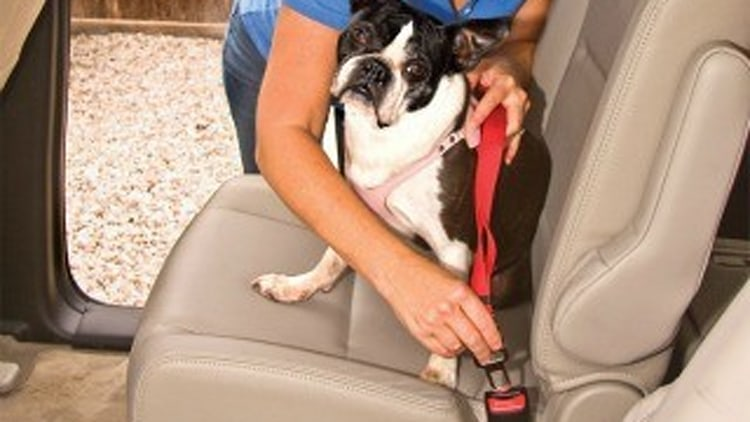 Recommended Product: Doggie Belt-Buckle
