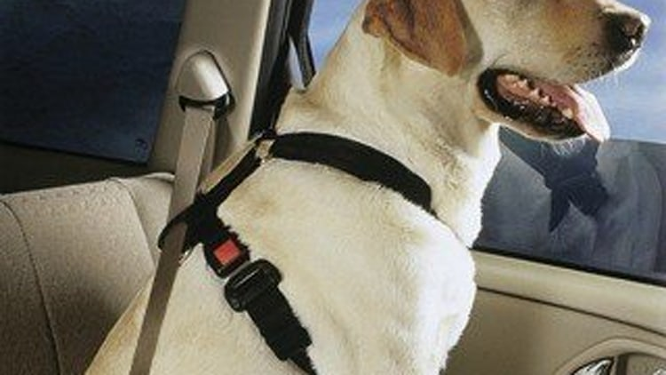 Recommended Product: The Doggie Harness