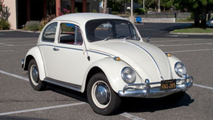 The Amazing, Successful Beetle