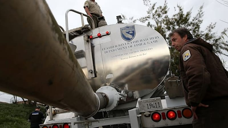 California drought forcing salmon to migrate via truck [w/video]