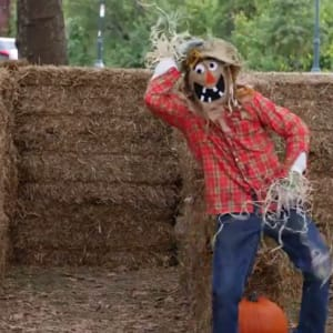 halloween, scarecrow, scary, viral video