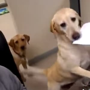 dogs, viral video