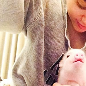 Big Time Rush's Kendall Schmidt Says Miley Cyrus Can't Handle Her Pig