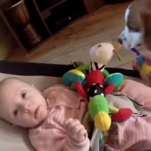 baby, dogs, viral video