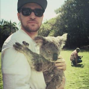 cute, justin timberlake, koala