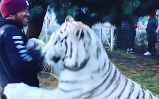 Lewis Hamilton 'plays' with huge white tiger in Mexico
