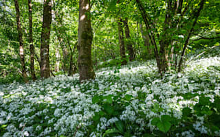 Foraging wild spring foods for free