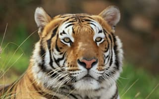 Zookeeper mauled to death by tiger in Benidorm