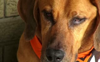Dog reunited with family two years after It went missing