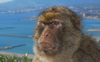 British tourist in 'worst-ever' attack by Gibraltar ape