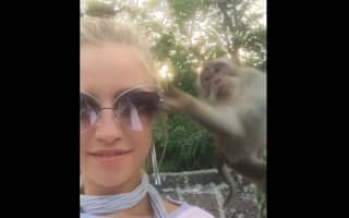 Cheeky monkey steals girl's sunglasses