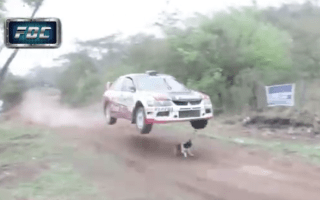 World's luckiest dog somehow dodges rally car