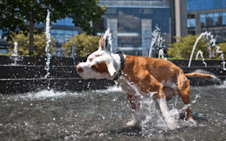 Pets who beat the summer heat