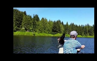 Eagle steals fish straight from fishing line