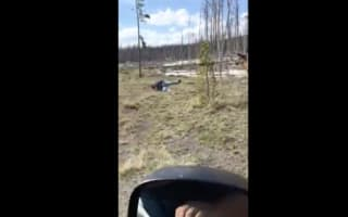 Elk charges tourist that gets too close in Yellowstone National Park
