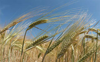 Charity warns on rising food prices