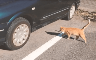 Nissan highlights the importance of checking for cats before driving