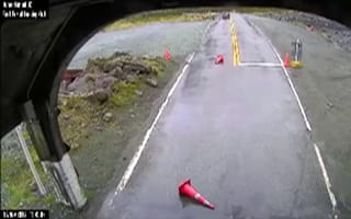 Parrots slow down traffic by moving road cones
