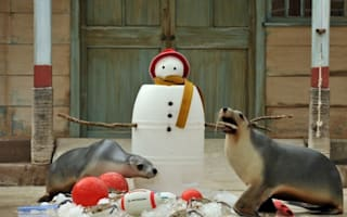 A furry merry Christmas to all! Zoo animals get festive