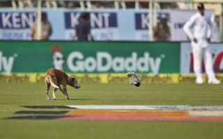 England's Test match in India halted by dashing dog
