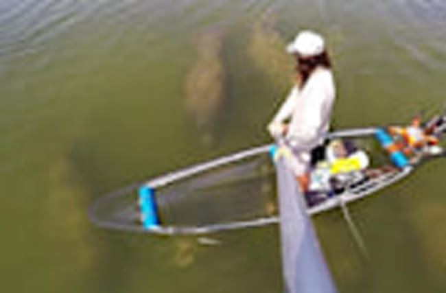 Manatees Surround Canoe