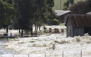 Spiders fall from the sky in Australia
