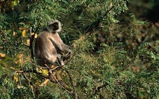 Woman killed by mob of monkeys