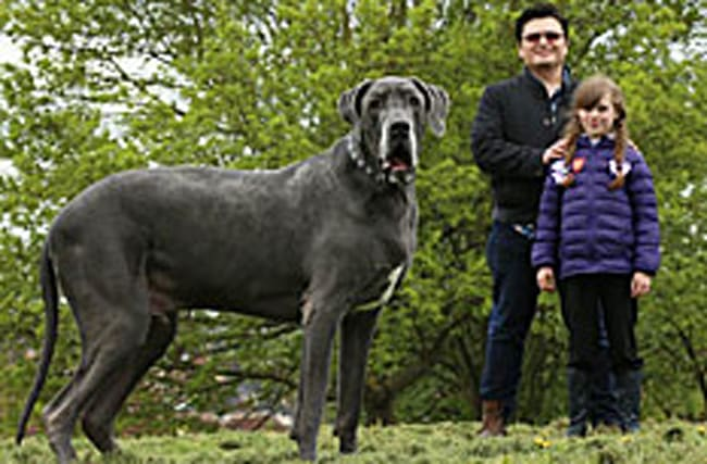 Britain's heaviest hound weighs the same as a baby elephant