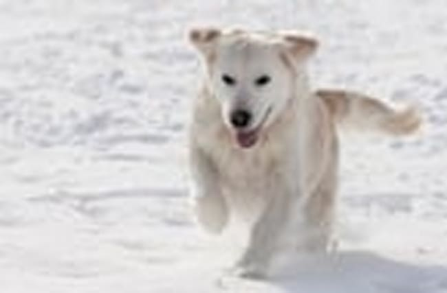 Keeping Your Pets Safe in Cold Weather