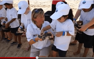 Video: Baby turtles released into the sea in Dubai