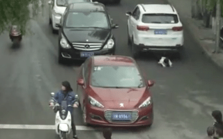 Toddler lies on road to avoid being hit by cars in miraculous video