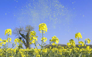 Super pollen to hit UK, according to allergy expert