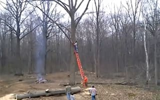 Tree trimming goes wrong when Mother Nature takes revenge (video)