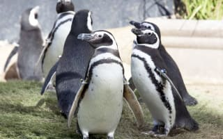 Malaria outbreak kills Longleat penguins