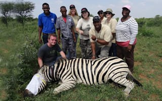Zebra saved from deadly snare
