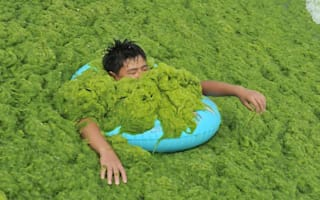 Fancy a dip? Chinese beach covered in blanket of green algae