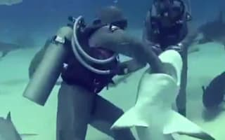 Video: Amazing moment diver reaches into 7ft shark's mouth to remove hook