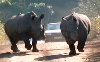 Rhinos charge at car during safari park journey