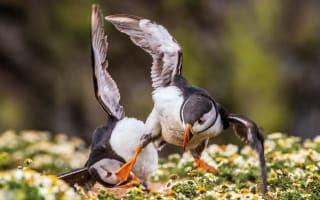 British Wildlife Photography Awards winning images revealed