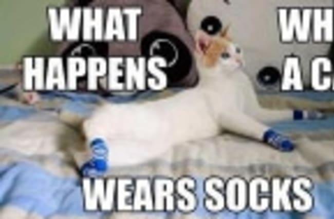 What happens when a cat wears socks?
