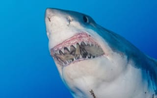 Ten easy places to get eaten by a shark