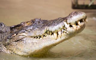 Teen attacked by crocodile after being dared to jump in river