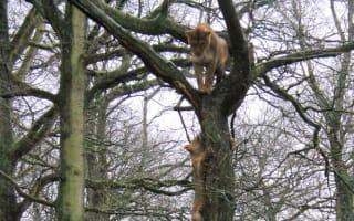 Outcry as six lions put down at Longleat Safari Park