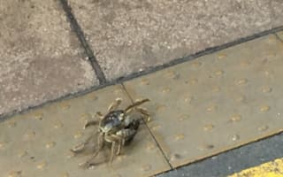 Live crab spotted getting off train in Cheltenham