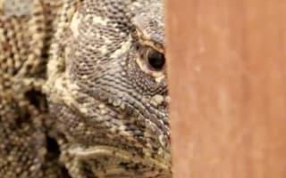 BBC cameraman on Planet Earth II finds Komodo dragon in hotel bathroom