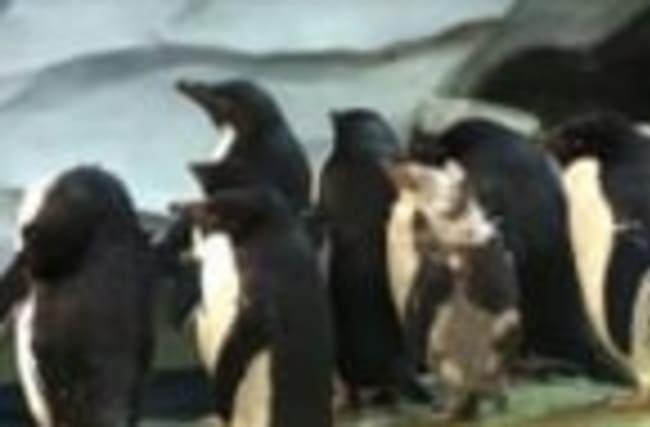 SeaWorld Designs Penguin Wetsuit